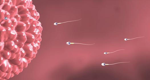 merevedéssel a petesejtek felemelkednek