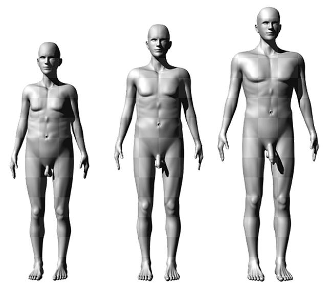 milyen méretűek a férfiak péniszei)