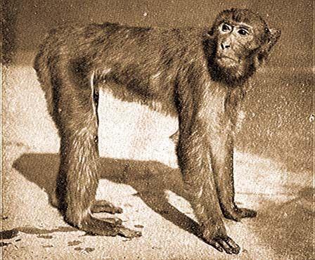 Feljettebbek lehetnek a csimpánzok kezei az emberekénél