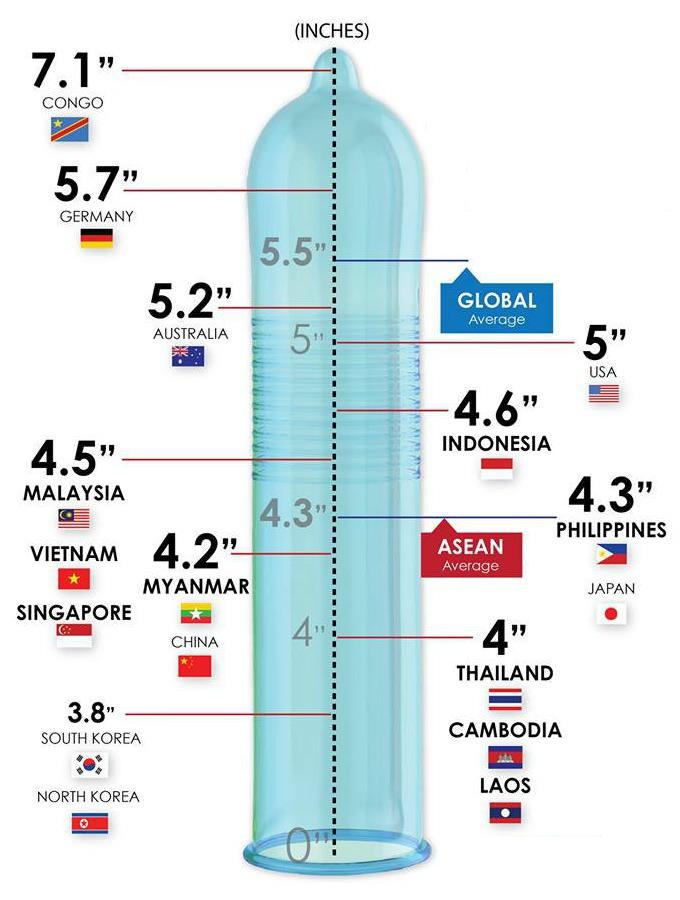 a pénisz hossza és átmérője)