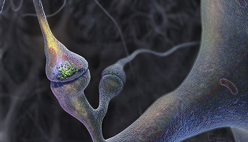 a mikroszkóp alatt pénisz