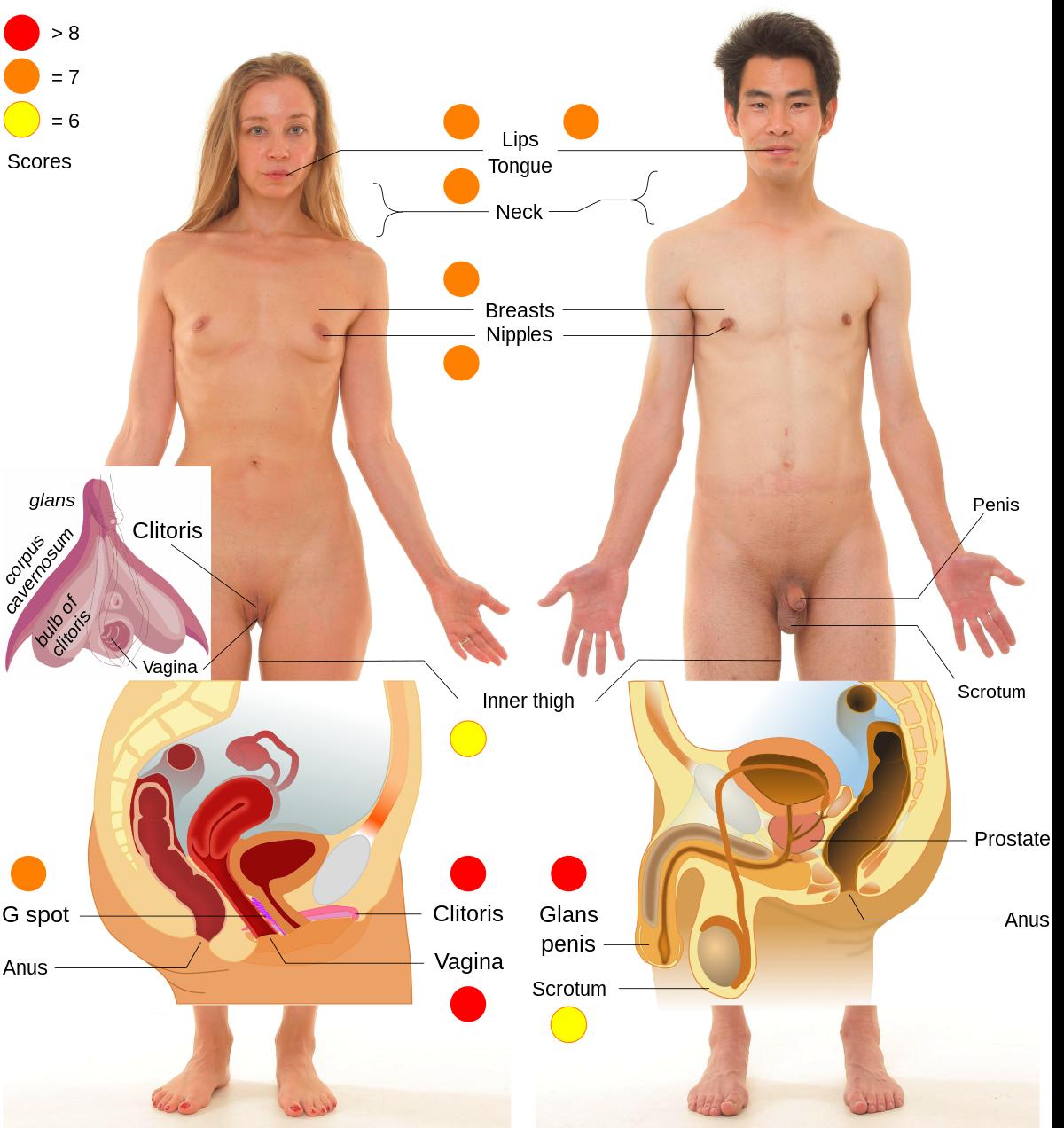 pénisz erogén zónák