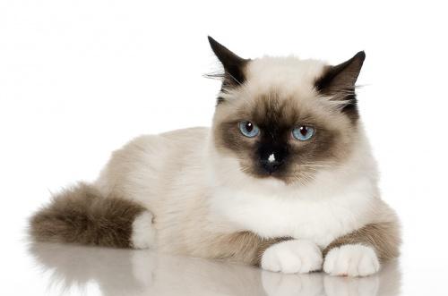 a macskának merevedése van a kasztrálás után)