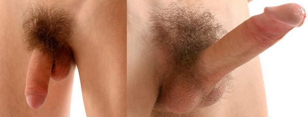 középső pénisz az erekció során