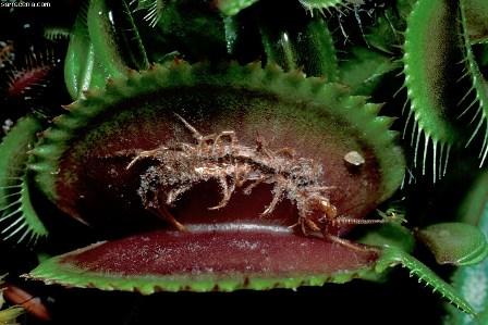 Az öt legkülönlegesebb növény   Érdekes Világ
