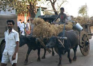 péniszméretek Indiában)