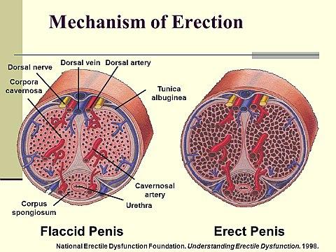 az erekciós poénokról