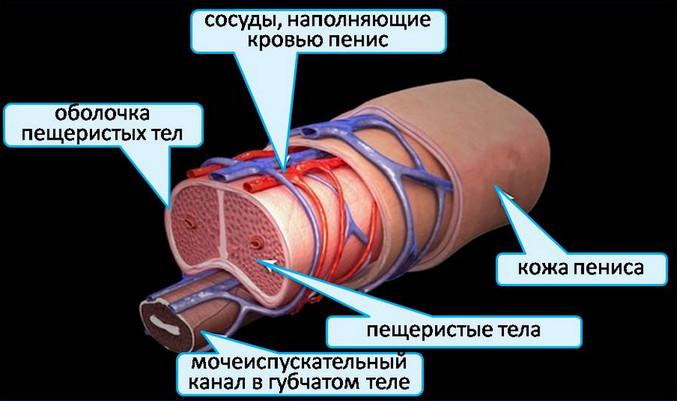 gyenge vagy instabil erekció)
