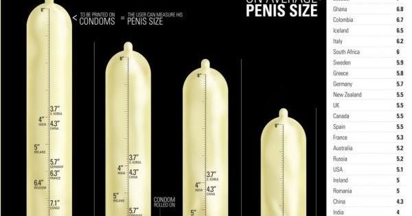 pénisz és méretei