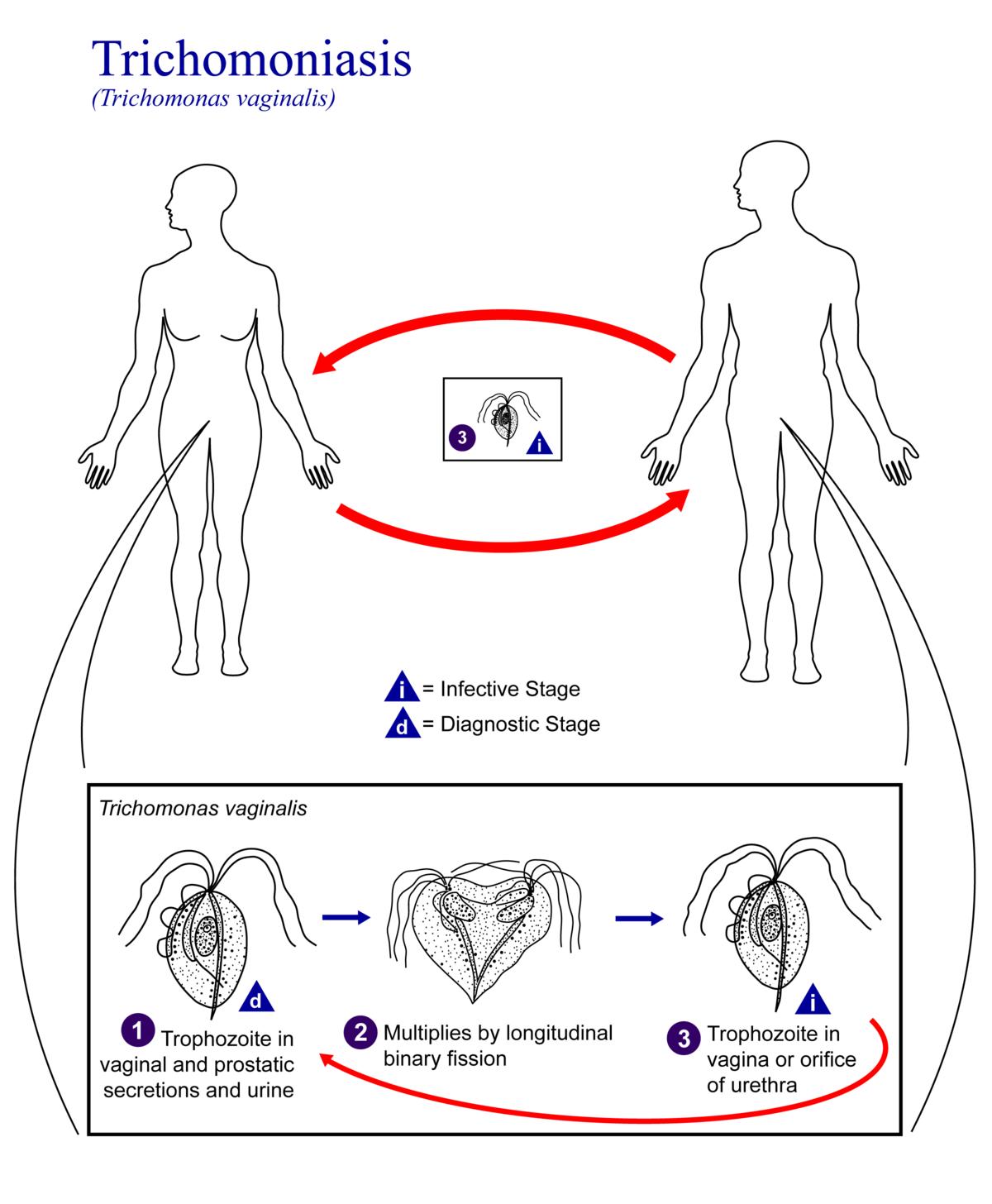 a pénisz fájdalmával, az okával ha nincs merevedési gyakorlat