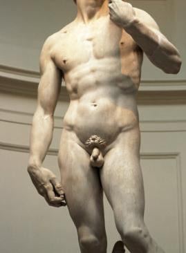 férfi hímvesszők mérete és alakja